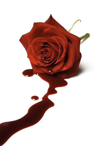 O amor de uma Flor e de um Beija-flor